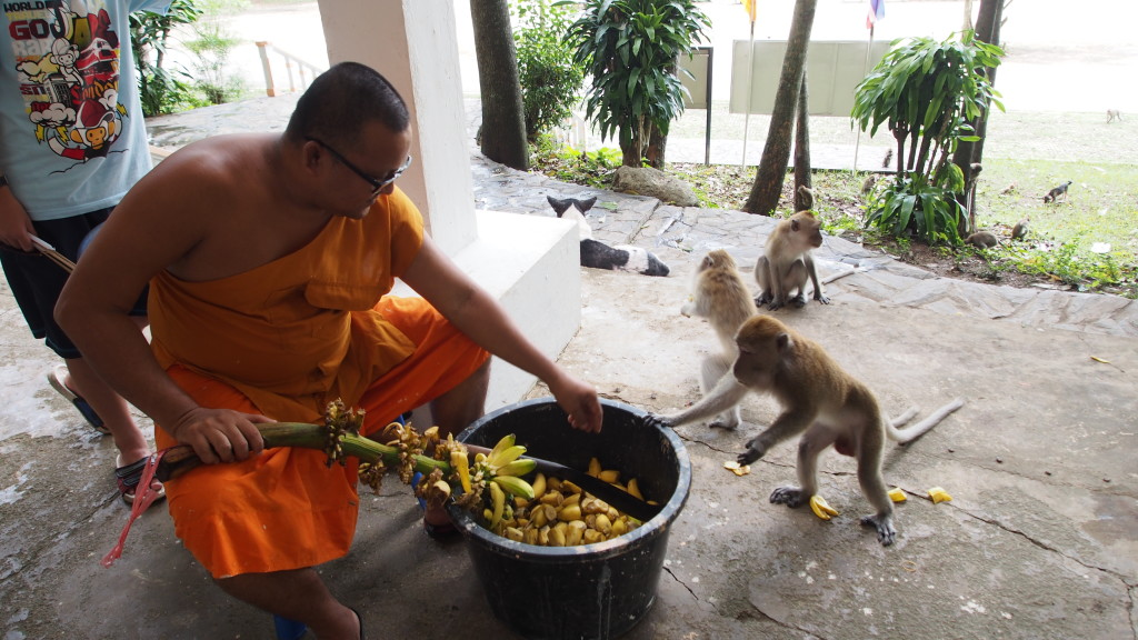 The monk feeding the monkeys