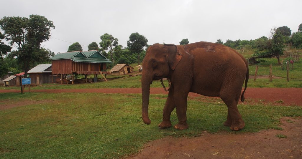 A bleak future for the elephants?