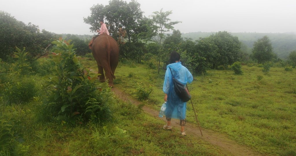 It was very peaceful, just us, the elephant and its mahout.