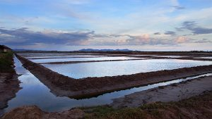 Salt Fields Kampot