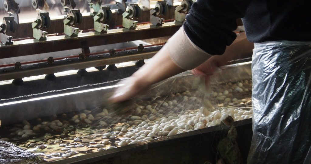 Silkworm cocoons being boiled and then sorted